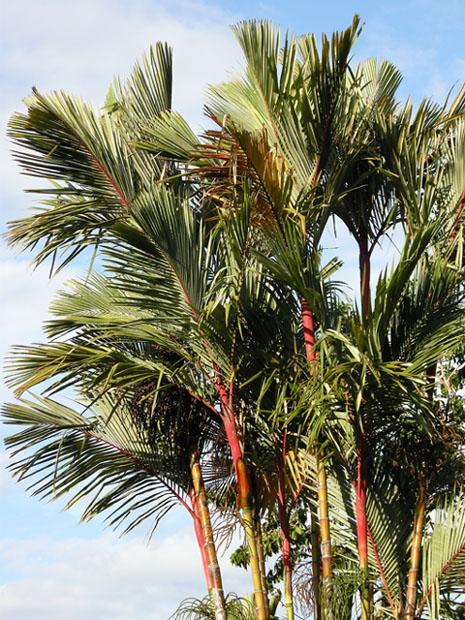 Som finns i palmer sjö co