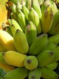 bananer_160