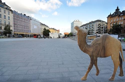 _DSC7602_kamelen